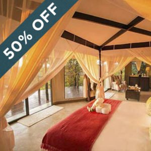 Save 50% at the breathtaking Elephant Camp!